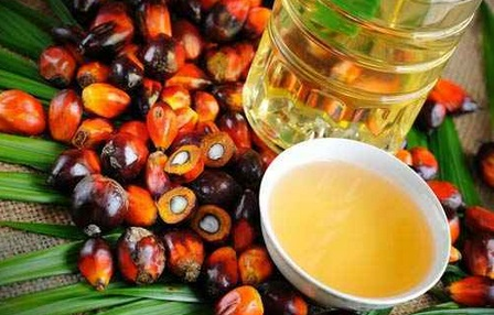 Ekspor Ke India Melonjak 51%, Harga CPO Ikut Melejit