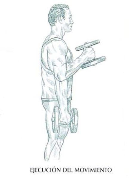 Ejecución del curl de bíceps con mancuernas tipo martillo, inspirar y efectuar una flexión del brazo, posteriormente descender a la posición inicial y expirar