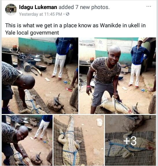 Photos: Man catches aligator in Cross River State