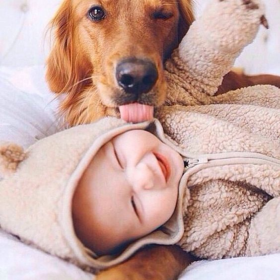 Cute baby boy playing with dog