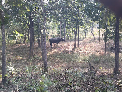 Udanti Sitandai Tiger reserve Gariyaband, Udanti Sitanadi Abhyaran udanti tiger reserve