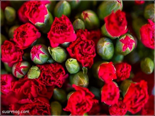 صور ورد - ورد احمر 10 | Flowers Photos - Red Roses 10