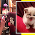 Adorable kitten smiles back for the camera and the internet are in AWE!