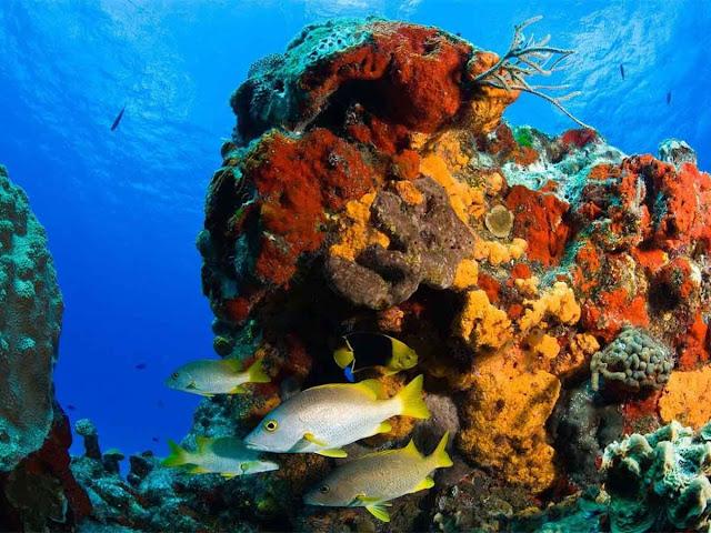 Reabren arrecifes Palancar y Colombia en Cozumel