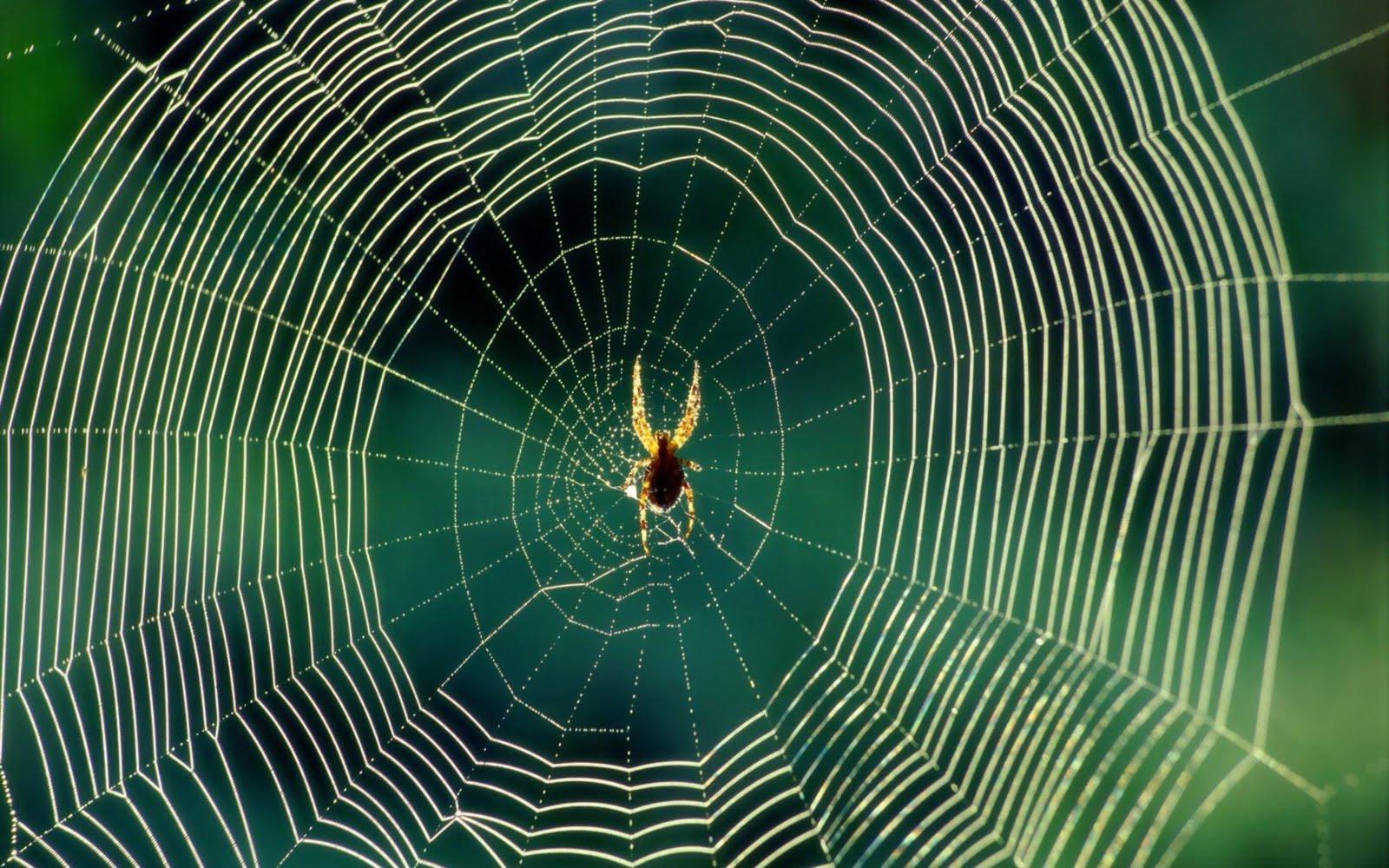 Spinnen achtergronden hd wallpapers - Afbeelding in ...