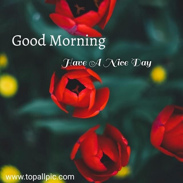Love Good morning Images for rose flower