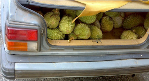 DURIAN CHASE IN MERSING AND MISSING... WE GOT PLUCKED. CLIK PIX BELOW TO READ