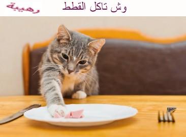 وش تاكل القطط