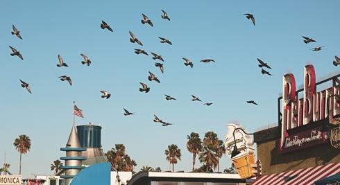Santa Monica Pier Los Angeles California