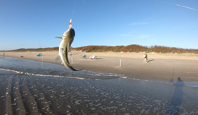 Florida East Coast Surf Fishing Fishing Reports Florida Fishing
