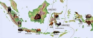 Tipe fauna di Indonesia