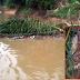 สยอง! พบศพหนุ่มถูกฆ่าทิ้งแม่น้ำ มีซากงูเหลือมยักษ์พันตัว ตร.สงสัยอำพรางคดี