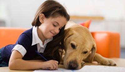 Puntos básicos disciplina perros niños