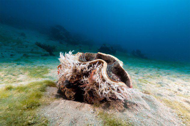 اكتشاف اعمق اجزاء المحيطات