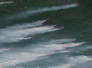 ALARMANTE: incendios forestales en siberia mas grande que el pais de Dinamarca.