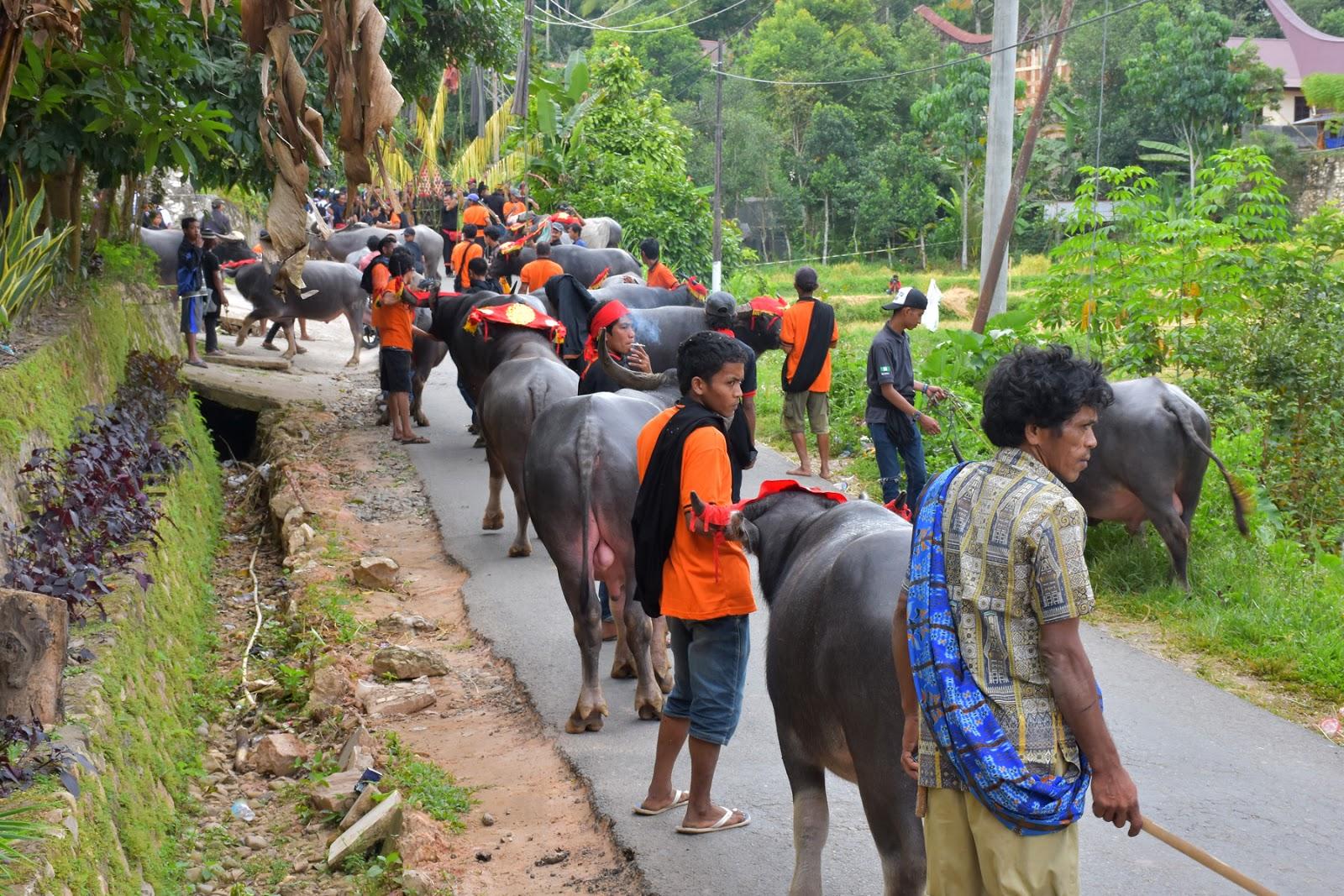 Prosesi Adat Ma'pasonglo' Pada Acara Pemakaman Almh. Yohana Randa Di Leatung Sangalla