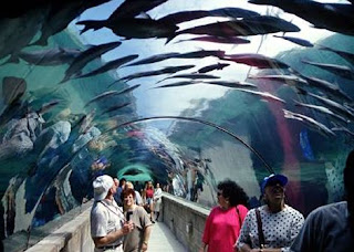 visiting an Aquarium