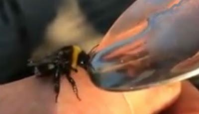 Lebah diberi cairan ekstasi.