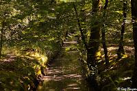 Canaux de la mare aux Evées à l'heure dorée, Forêt de Fontainebleau