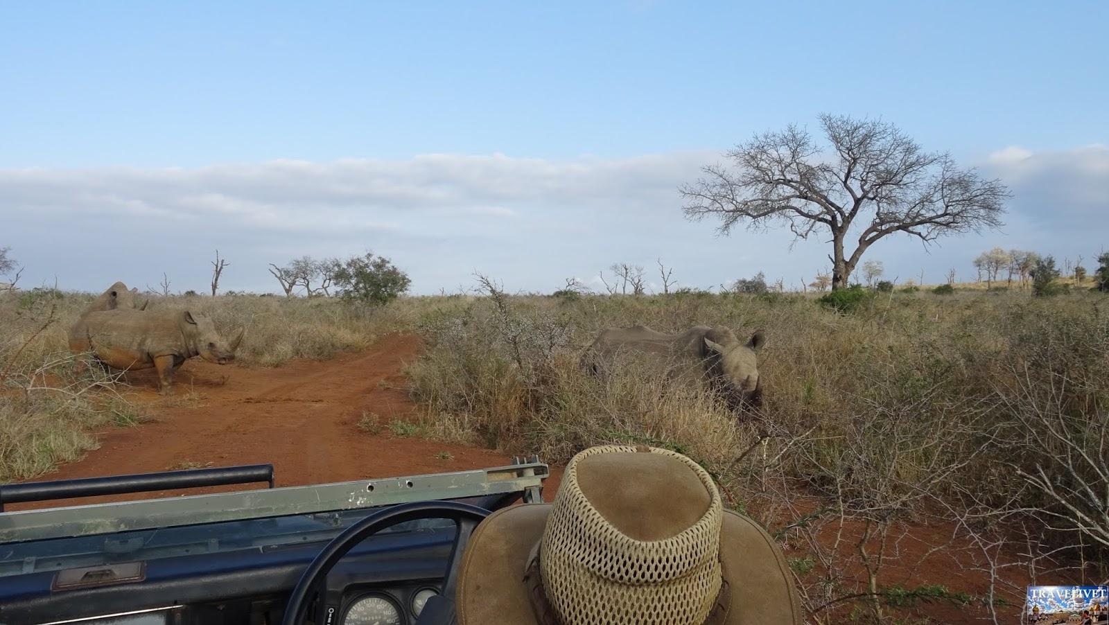 Safari Mkhaya Game Reserve du Swaziland Rhinocéros