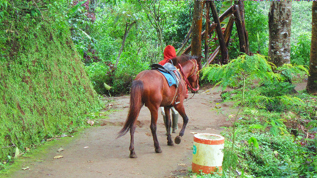 kuda di coban pelangi
