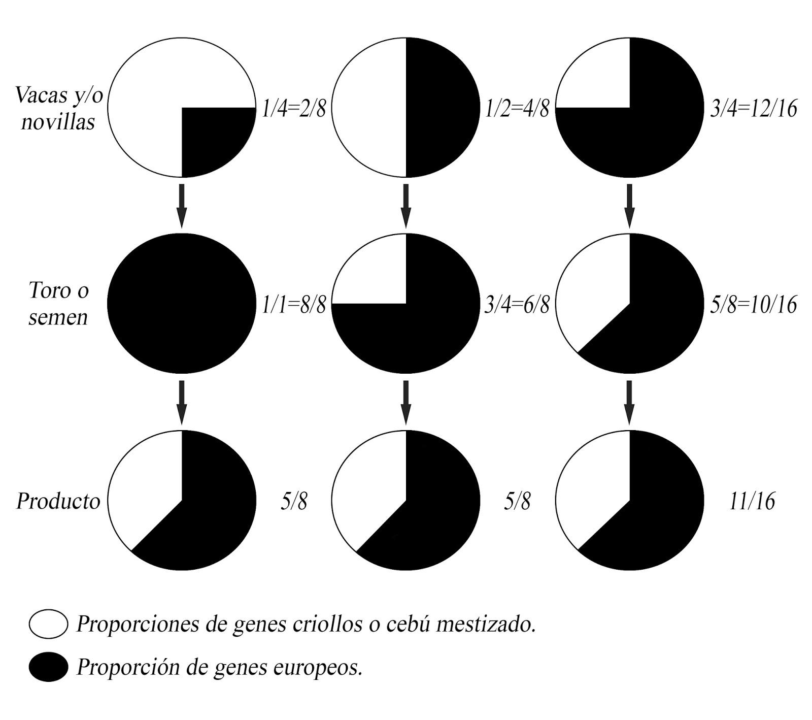 Generalidades De La Ganaderia Bovina