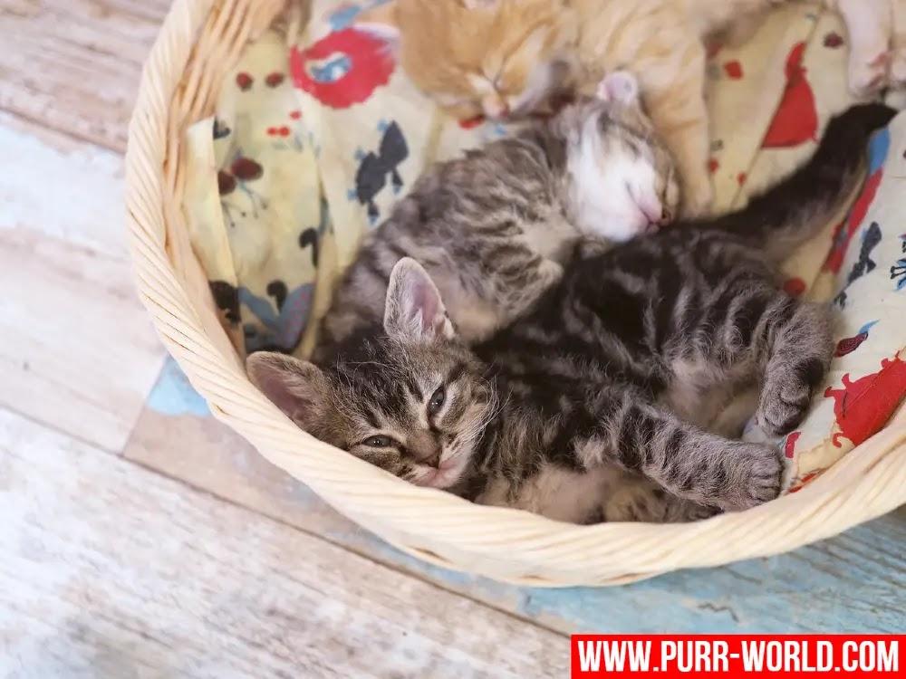 كيفية فصل القطط الصغيرة عن أمها