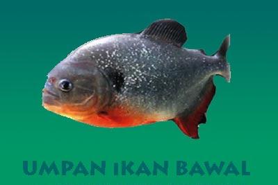 6 Jenis Umpan Ikan Bawal Untuk Mancing