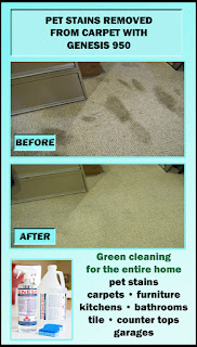 carpet pet stains remover