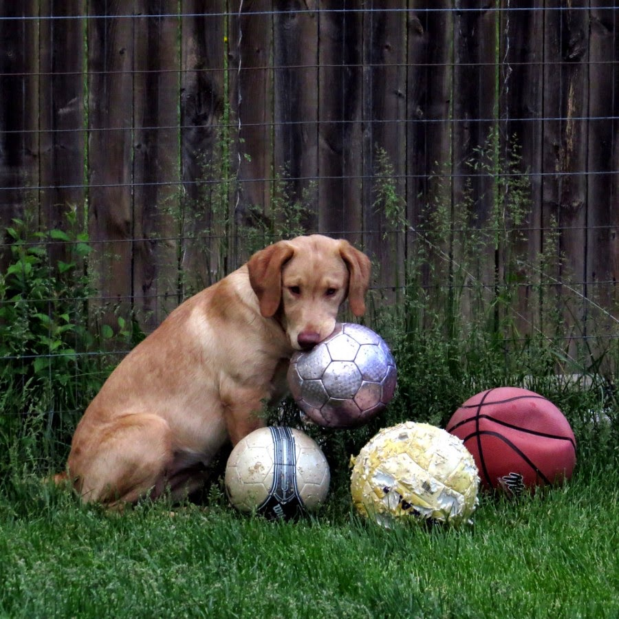 Animals Are Seriously In Love with Soccer