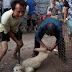 Η Σεντζέν απαγορεύει με «ιστορική απόφαση» την κατανάλωση γατιών και σκύλων