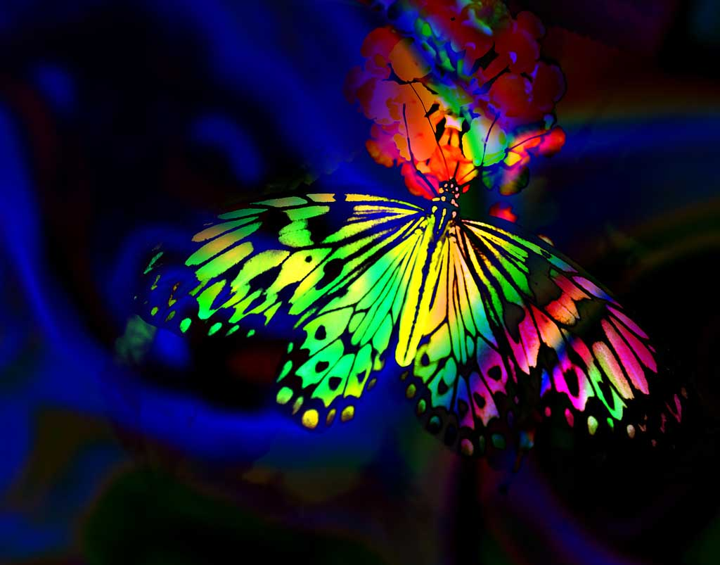 Neon Butterfly Desktop Background: HQ Wallpapers: Black Rainbow Wallpapers