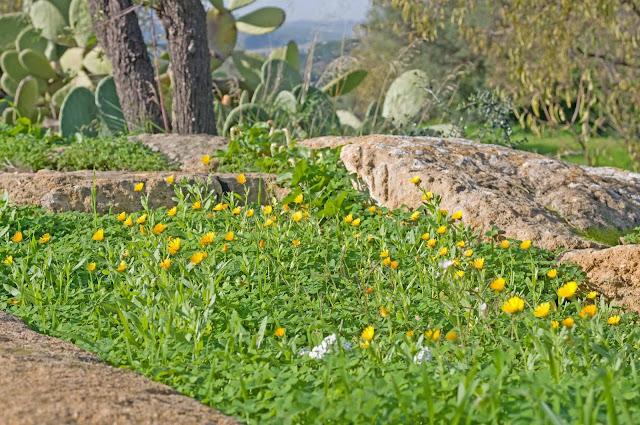 kwitnące kwiaty na Sycylii, kiedy można spotkać