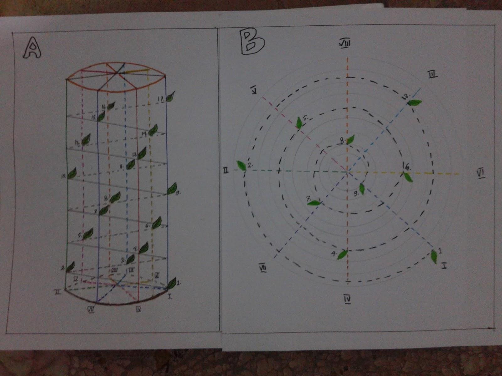 Biologi saya akan menjelaskan tentang bagan duduk daun dan diagram duduk daun menurut rumus 38 saya tidak menjelaskan materi tetapi langsung kecontoh saja agar ccuart Images