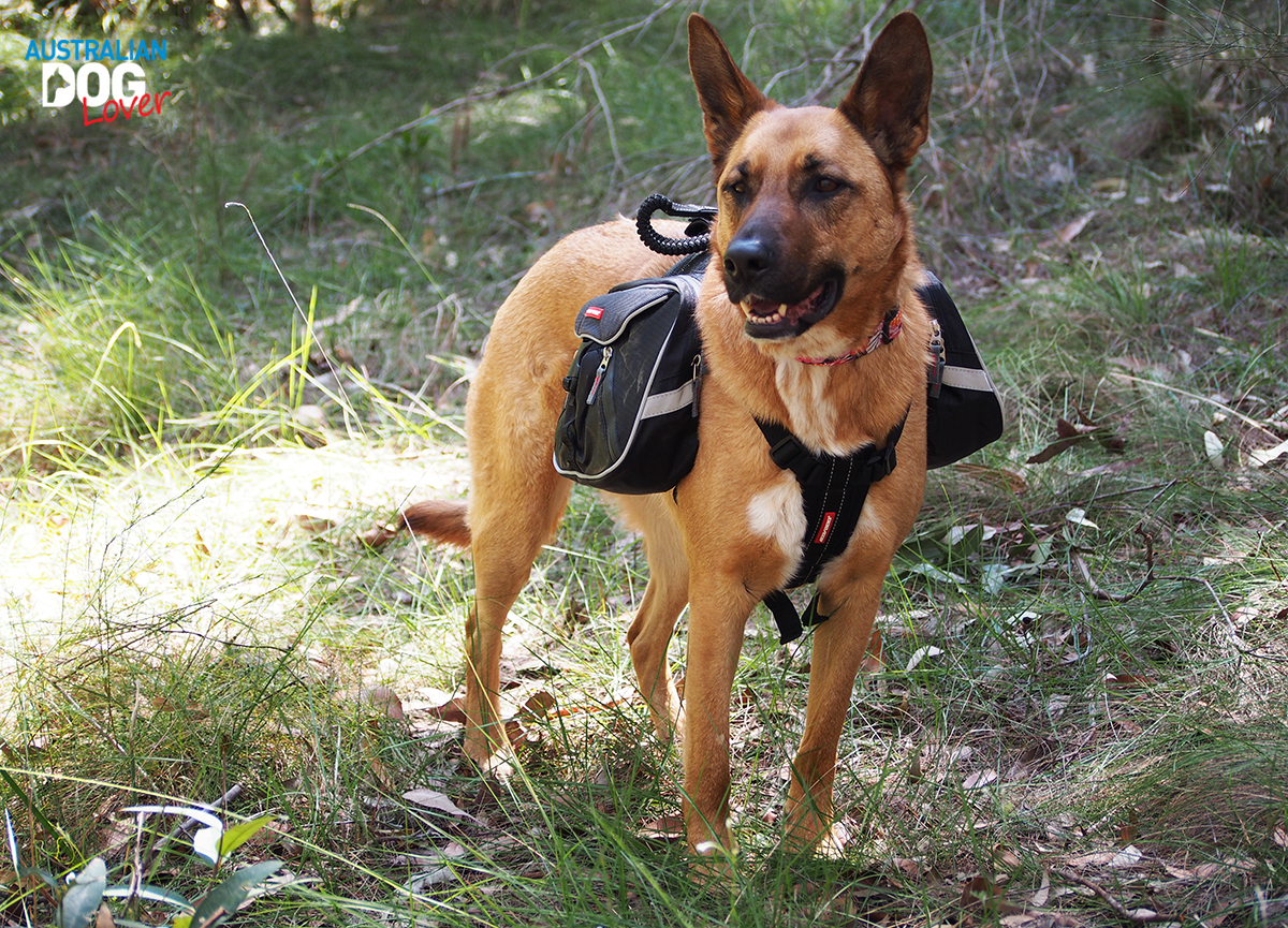 EzyDog Summit Backpack for Dogs - Using the Leash Caddy