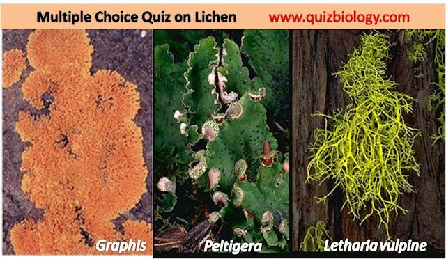 Lichen Quiz