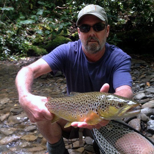 summer big brown trout Great Smoky Mountains National Park