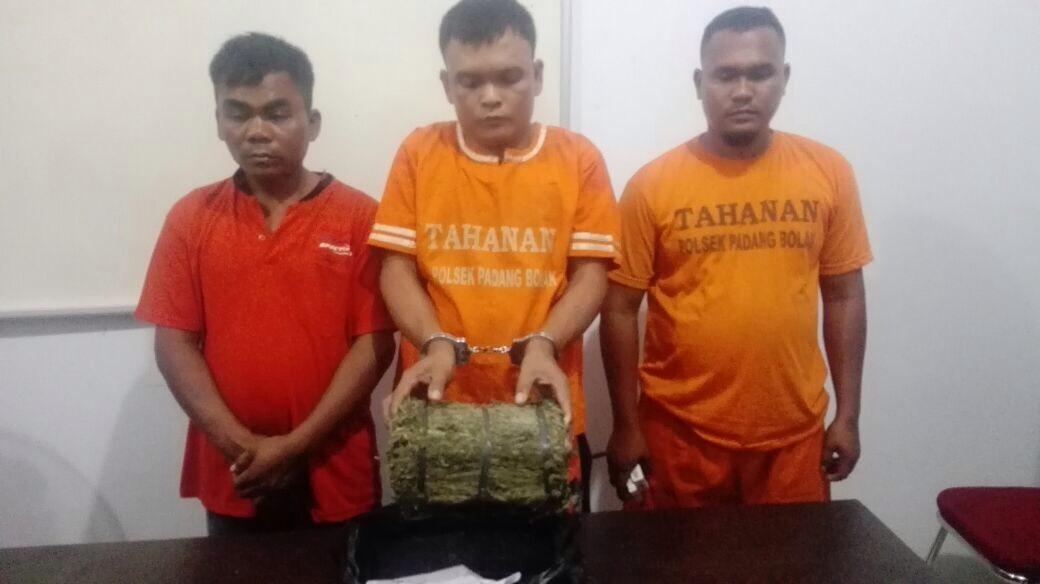 Ketiga tersangka bersama barang bukti ganja saat berada di Mapolsek Padang Bolak, Selasa (27/3).