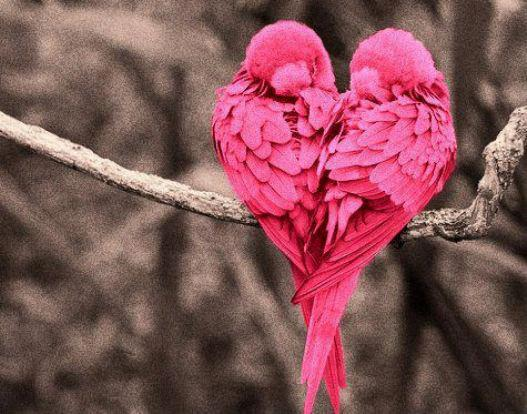 Lotus Flower Real True Love Relationships Broken Hearts