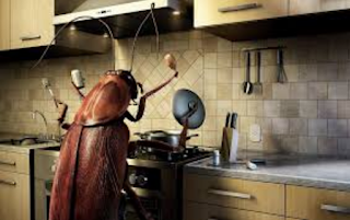 dreming about cockroaches