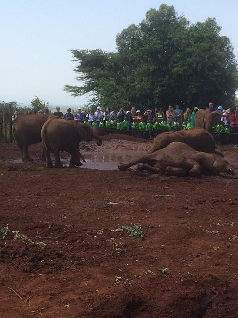 David Sheldrick Wildlife Trust orphan baby elephant