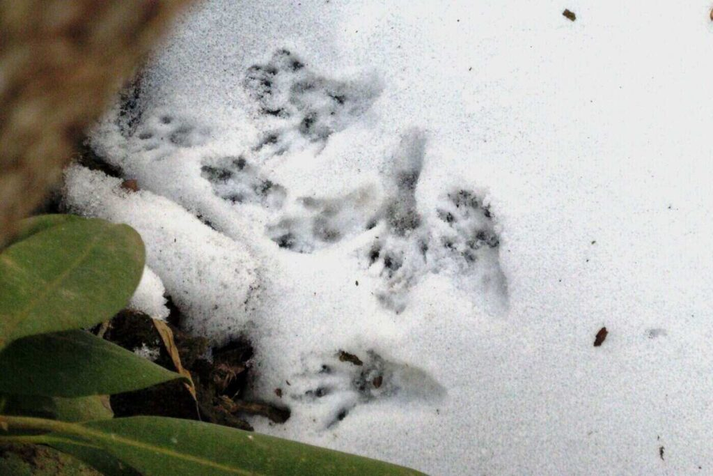 Winter Wildlife Tracks