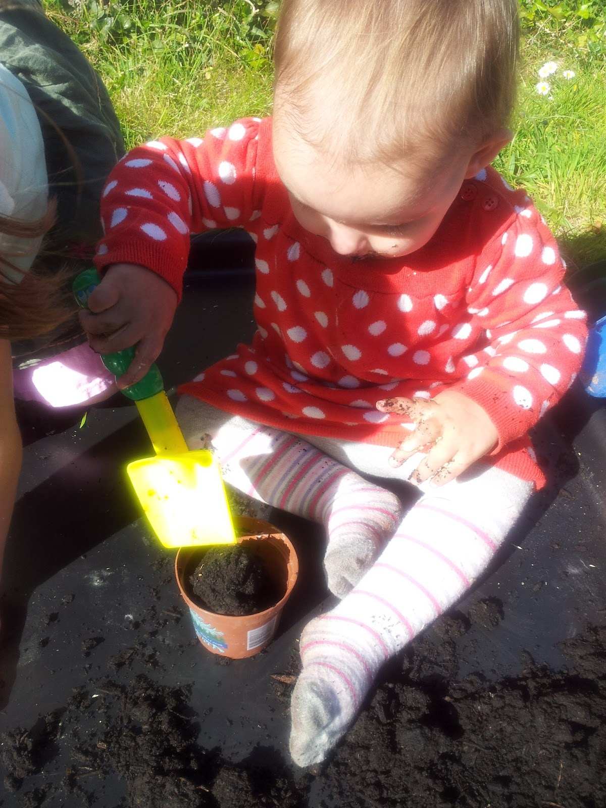 Planting Growing Sunflower Tomato Seeds Messy Play Matilda Mae