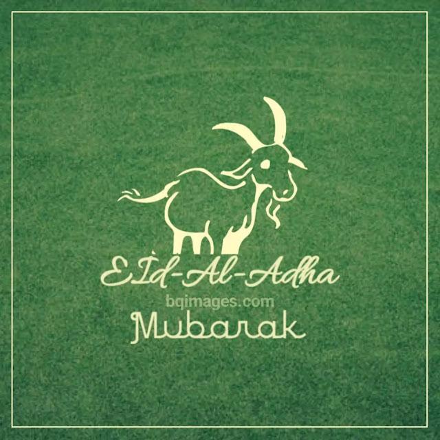 bakrid mubarak dp