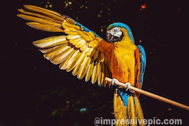 Beautiful art image of yellow parrot