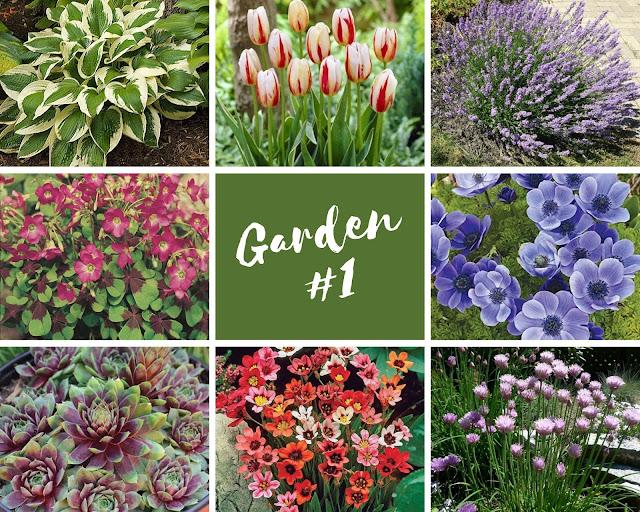 Rock-n-Zen Garden Plot #1 plants identification.