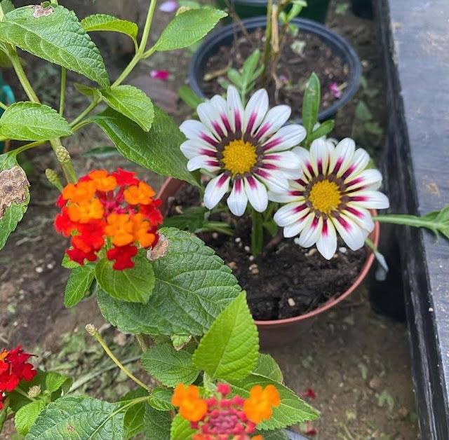 flores coloridas creciendo
