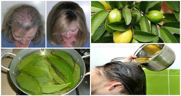 A guava levelek fogyni szoktak - Chia arra törekszik, hogy lefogy yahoo leveleket
