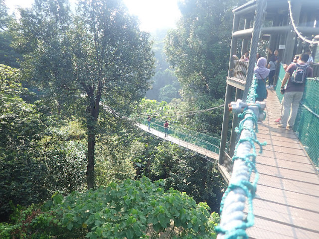 hutan hujan tropis di tengah kota