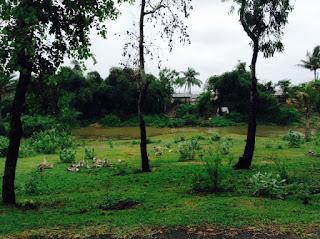 hd natural landscape
